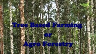 Tree Based Farming or Agro Forestry