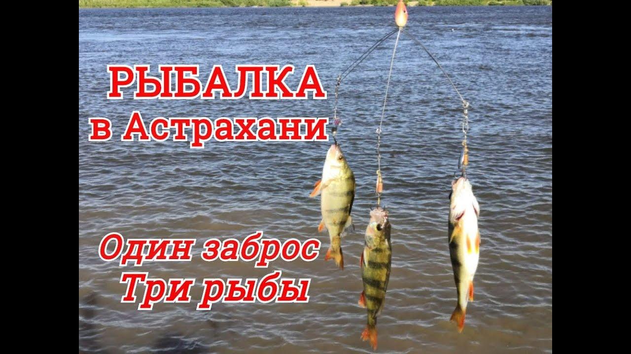 РЫБАЛКА в АСТРАХАНИ: Ловля ОКУНЯ на спиннинг. Хитрая снасть один заброс три рыбы сразу.