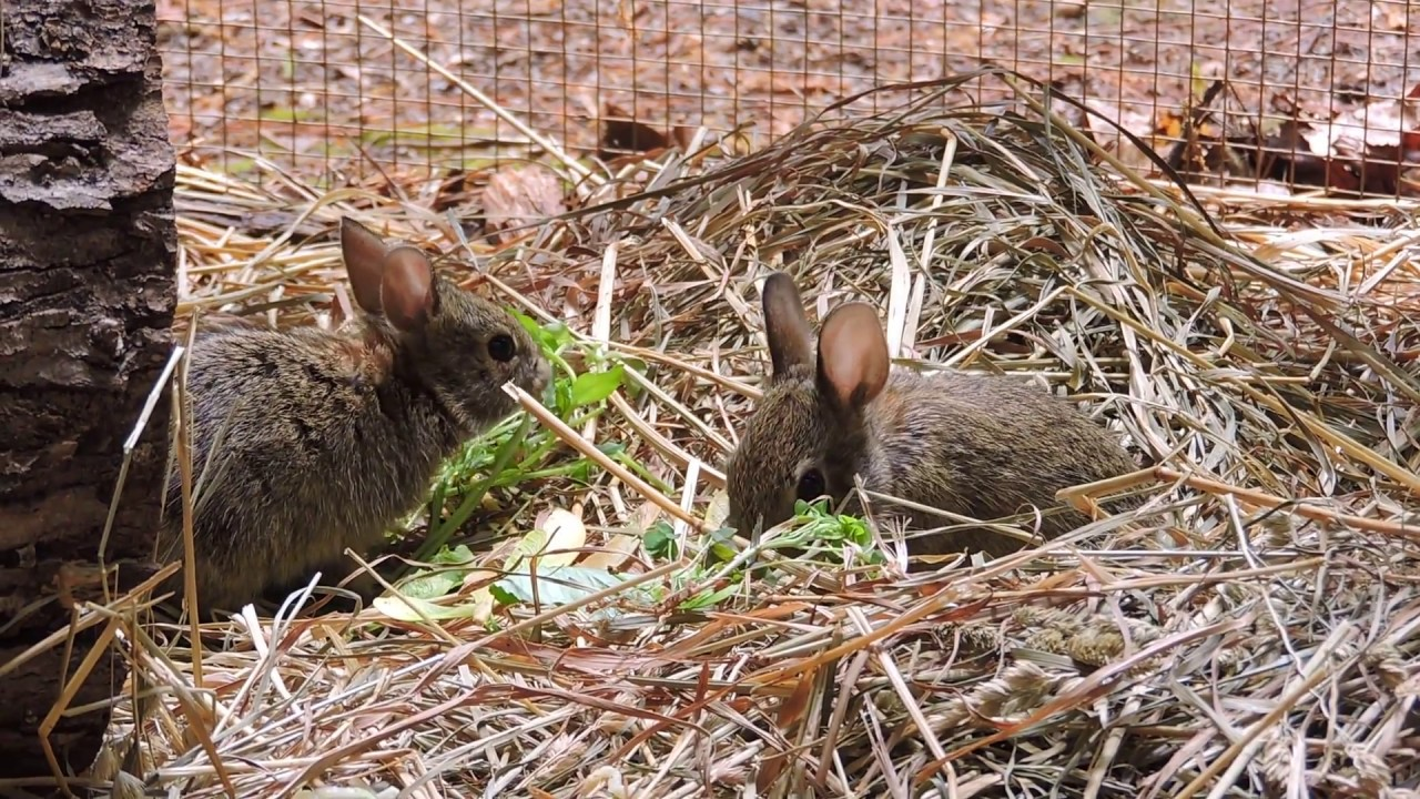 For the Cottontails - Wildfoods 4 Wildlife