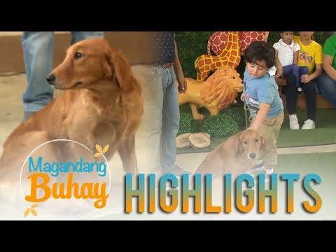Magandang Buhay: Meet Daniel Padilla's dog, Luna