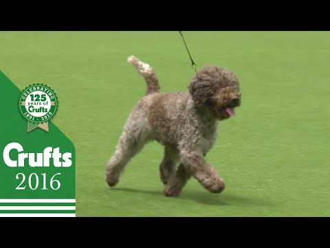 Gordon Setter wins the Gundog Group Judging | Crufts 2016