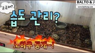 육지거북이 + 파충류 습도관리 노하우를 공개 합니다~!…