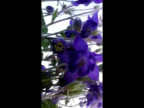 Вопрос: Как называется этот цветок с фиолетовыми цветами (фото)?
