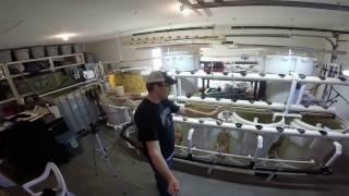 (2/26/2017) Dividing New Tilapia Into Barrels