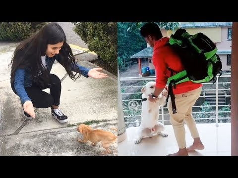 Dogs Meets Owner After Long Time - TRY NOT TO CRY