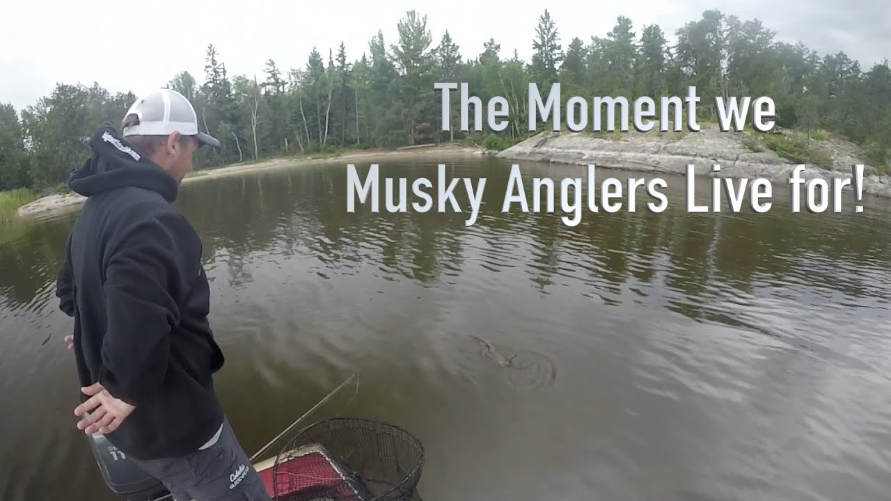 Best Musky Bucktail - Lake of the Woods 50 incher - Bigtooth JUICE