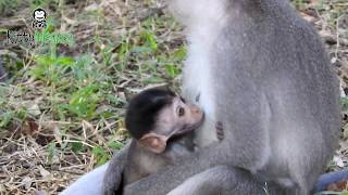 What brother monkey doing on sister monkey?