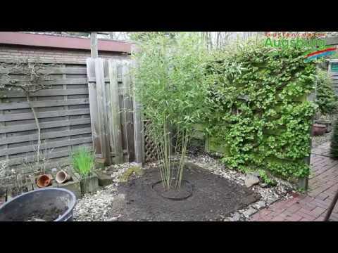 bambus im garten, bambus - einpflanzen im garten - youtube, Design ideen