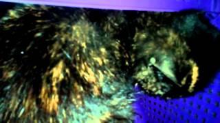Спасение животных: стерилизованная кошечка ищет хозяина.