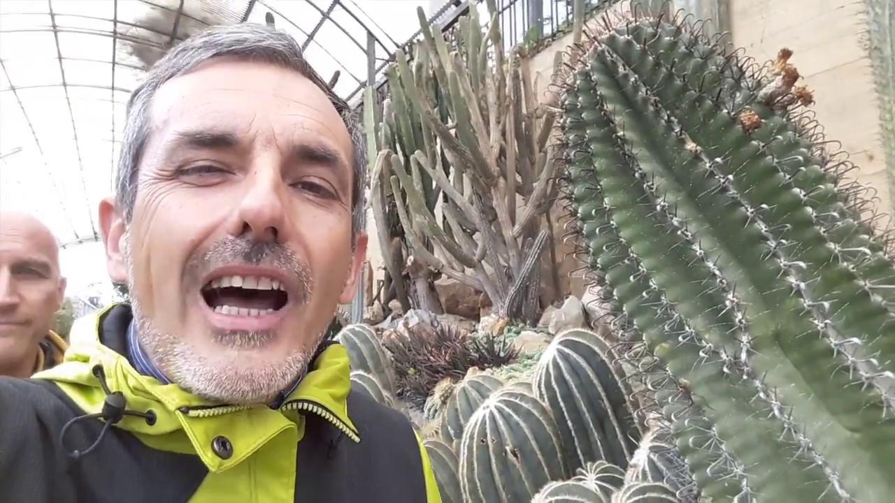 Come Allontanare i Bruchi dal Giardino: 9 Passaggi