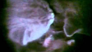 Спящий котёнок.MP4