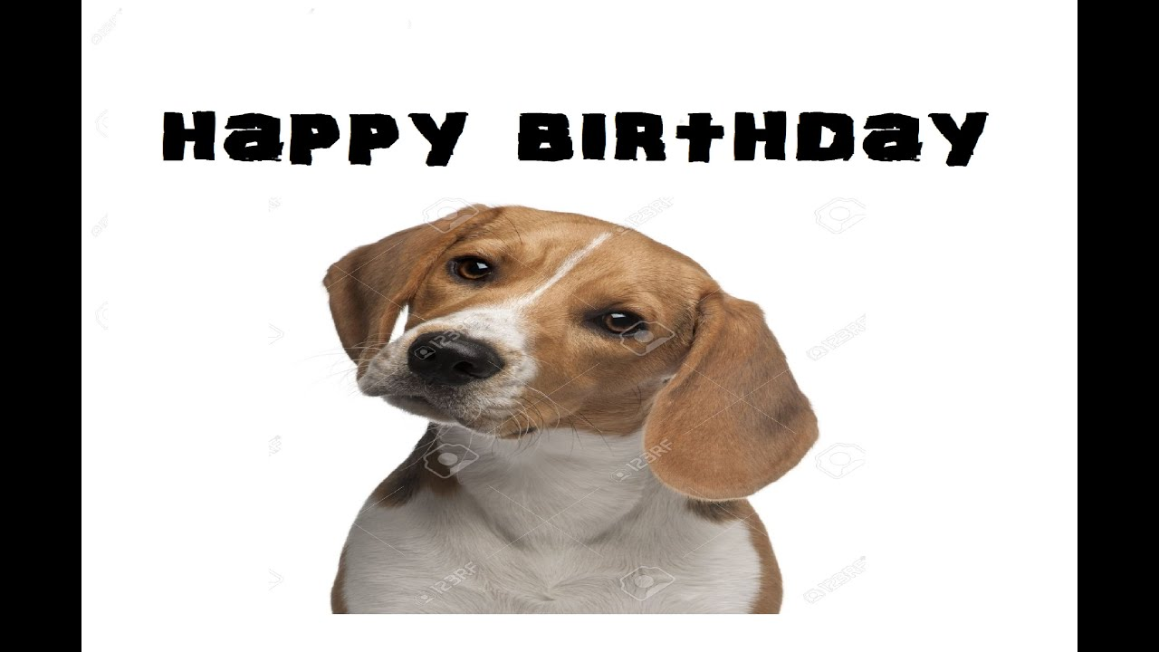 Very cute puppy dog happy birthday greeting card youtube kristyandbryce Choice Image