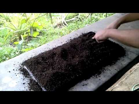 Organic Farming in the Philippines (making seedlings)