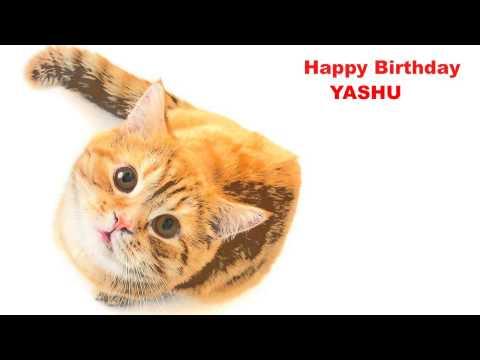 Yashu   Cats Gatos - Happy Birthday