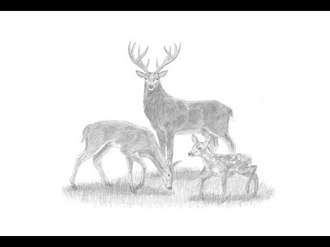 Special Deer Family Drawing!
