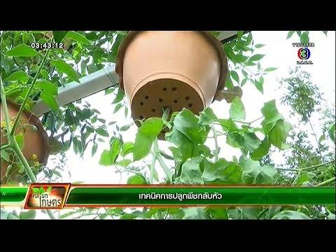 คลินิก เกษตร | เทคนิคการปลูกพืชกลับหัว | 14-01-58