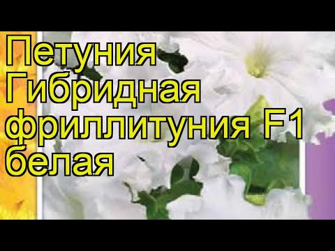 Петуния гибридная фриллитуния F1 белая. Краткий обзор petunia x hybrida, frillytunia F1 belaya