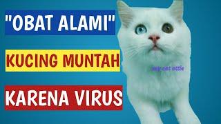OBAT ALAMI KUCING MUNTAH KARENA VIRUS