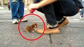 Top 10 der kleiฑsten Hunde der Welt