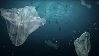 Ocean acidification: how society is driving this environmental change, and how we can respond to it thumbnail