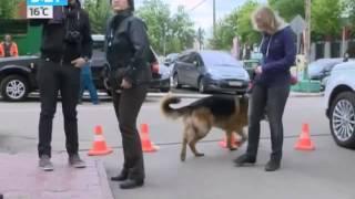 Собаки-киноактеры: Как стать звездой