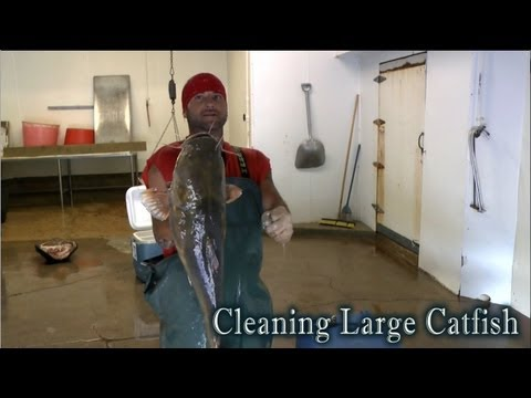 Speed Cleaning Flathead Catfish