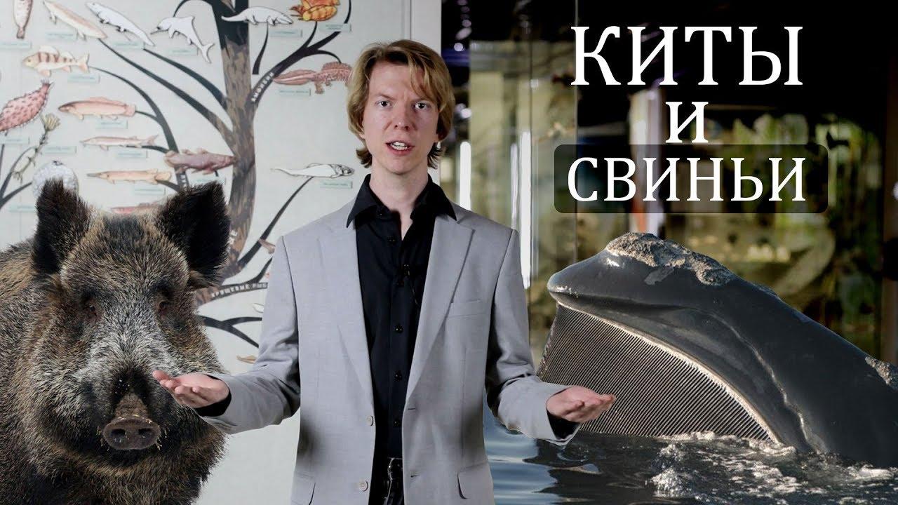 Киты и свиньи родственники! Эволюция китов. Ярослав Попов | Палеонтологические истории #015