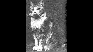 Зачем в 1943 году в Ленинград завезли 5000 кошек.