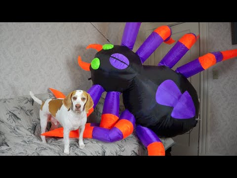 Dog vs. Giant Spider: Cute Dog Maymo