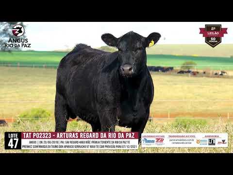 LOTE 47   TAT PO2323 ARTURAS REGARD DA RIO DA PAZ TE - Prod. Agência e TV El Campo