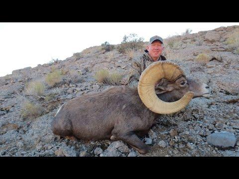 "Epic Desert Bighorn Sheep Hunt, 182"" Giant"