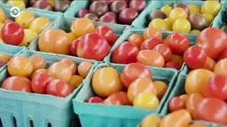 Как фермерам из СНГ попасть на органический рынок США?