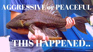 AGGRESSIVE OR PEACEFUL FISH? (Official Video)