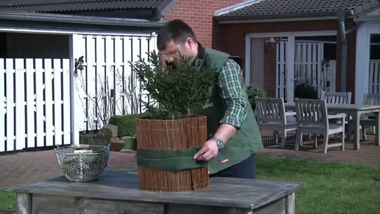 Kölle Weihnachtsdeko.Winterschutz Für Ihre Topfpflanzen Pflanzen Kölle