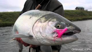 How to Catch Silver Salmon - OPST