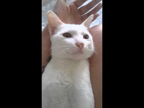 Funny Cat - He don