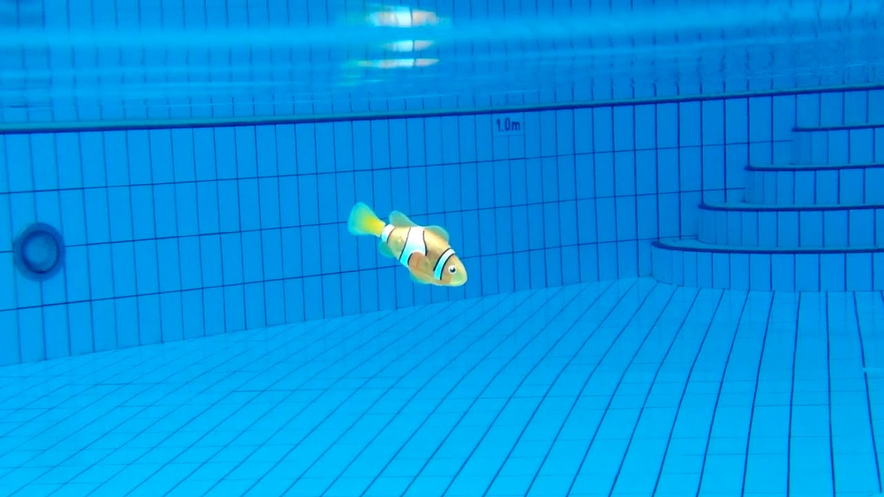 finding nemo in my swimming pool youtube