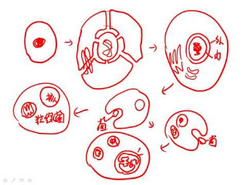 10402選修生物1 1 06原核生物至真核生物二簡