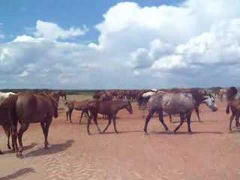 6666 ranch horses