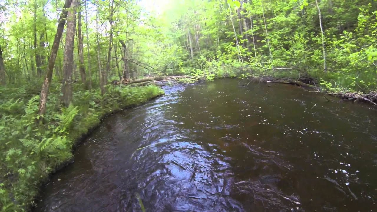 Northern minnesota nymph trout fishing youtube for Trout fishing mn