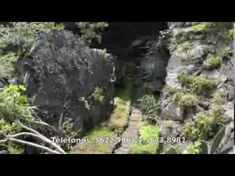 Territorio ambiental tema jard n bot nico del instituto Jardin botanico de la unam