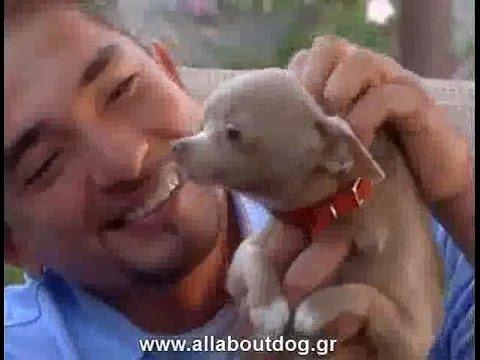 Cesar Millan - Εκπαίδευση σκύλου και ανθρώπου