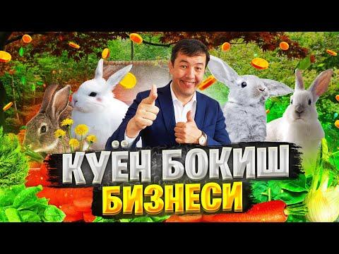 КУЁН БОКИШ БИЗНЕСИ ШАЛПОН КУЛОКЛАР#ойбеккосимов  #куён куён бизнеси