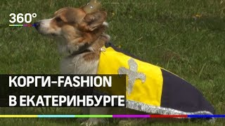 Корги-fashion. Лучшую собаку-улыбаку выбрали в Екатеринбурге
