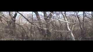 ran 3 shot 2 great running woods bunnys 6 hours of running