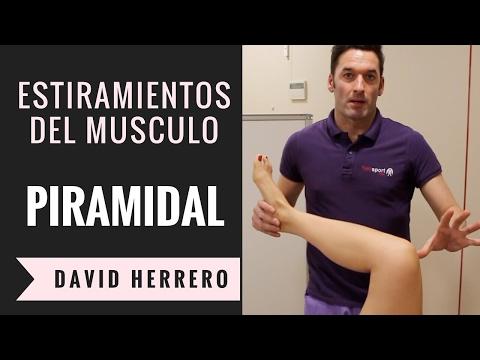 4 Estiramientos del músculo piramidal para realizar en casa
