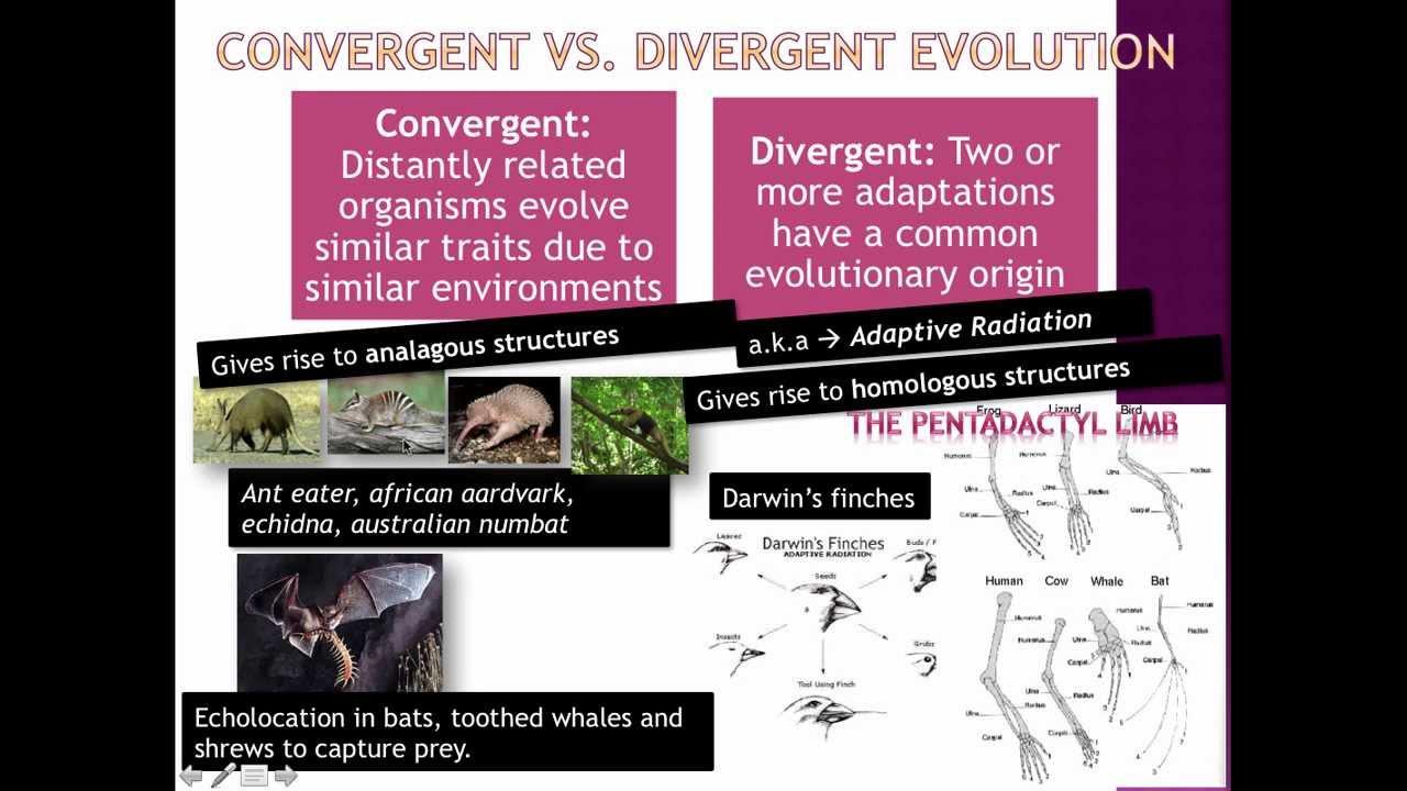 Types Of Evolution  Ib Biology