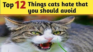 12 Things Cats hate that you should avoid | Cats hate the most | Things you wanna know