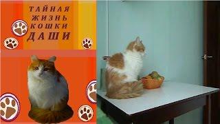 Кошка Даша лазит по столу. Проверка №5.