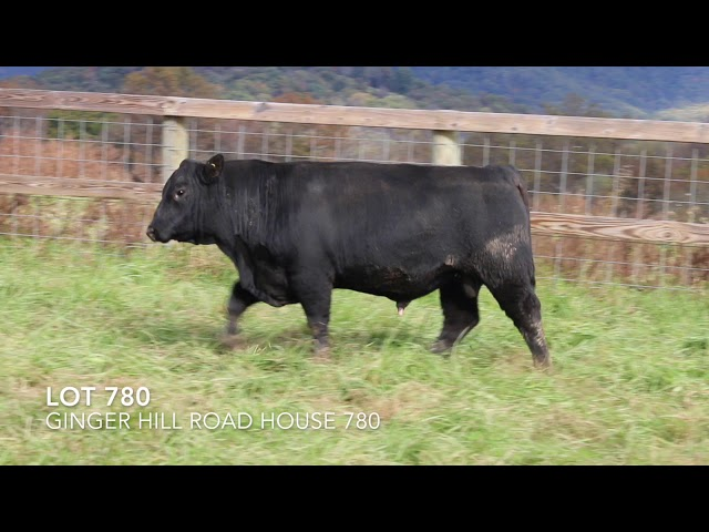Ginger Hill Angus Lot 780